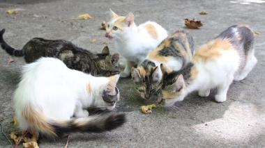 Gatos callejeros.