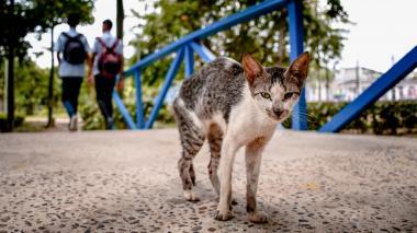 Uno de los más de cincuenta gatos que habitan en el ecoparque de La Victoria.