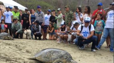 Liberan 20 tortugas en playas del Magdalena