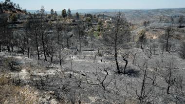 Árboles quemados por el incendio cerca de Flix.