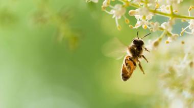 ¿Qué tanto conocemos de nuestros insectos?