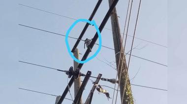 """""""Una cadena de moto fue lanzada contra las redes"""": Electricaribe tras fallas de energía en Guamal"""