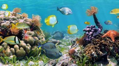 Abren becas para tesis en torno a la biodiversidad