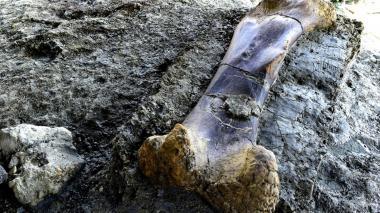 Fósil de dinosaurio, el más reciente 'tesoro' en Francia