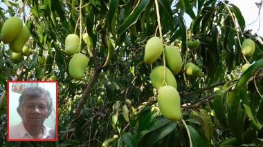 Hombre muere tras caer de un árbol de mango en Galapa
