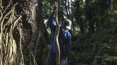 Animales silvestres como mascotas, la amenaza para la fauna en Colombia