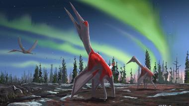Impresión de un artista de un Cryodrakon boreas, una especie de pterosaurio recientemente descubierta.