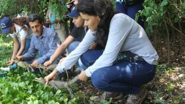 Liberan 1.200 hicoteas, 22 babillas  y 72 tortugas en La Guajira