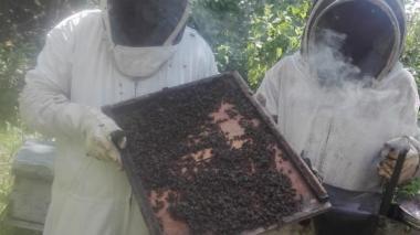 Apicultores del sur de Córdoba al borde de la quiebra por nuevo apicidio