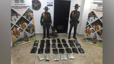 En video   'Rambo', el perro de la Policía olfateó 20 kilos de marihuana