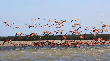 La Guajira, destino de aventura y avistamiento de aves que será promocionado en el Nature Travel.