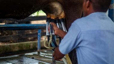 Megaleche pone a producir a los pequeños ganaderos