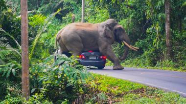 Elefante rebelde mata a cinco aldeanos en India