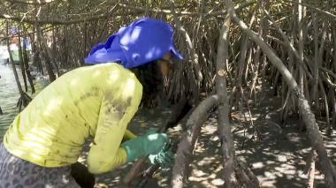 En video | El drama de los pescadores afectados por el petróleo en las playas de Brasil