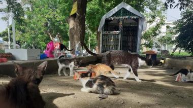 'Villa Gatuna'... Refugio de gatos abandonados en Santa Marta
