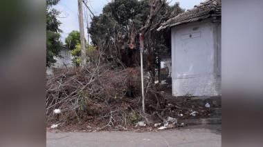 Árbol caído con ramas secas.