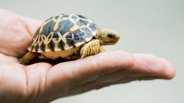 Decenas de tortugas de una especie en peligro de extinción desaparecen de un zoológico en Japón