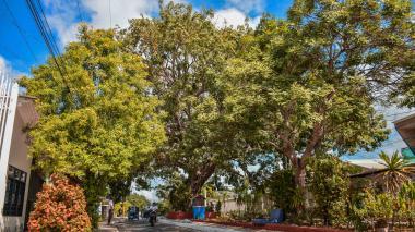 Vista panorámica de la bonga que se levanta sobre el bulevar de la calle Esperanza, en el centro del barrio La María, en Soledad.