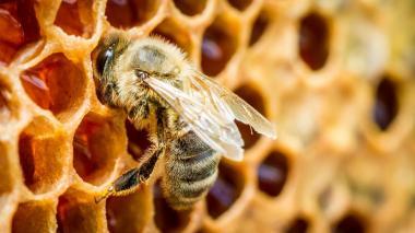 Francia prohíbe dos nuevos pesticidas para proteger a las abejas