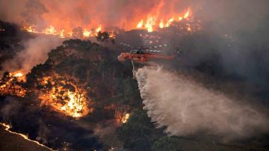 Los incendios en Australia podrían ser fatales para ciertas especies