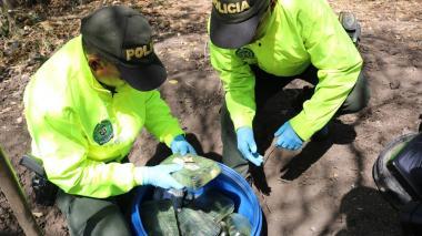 En video | Hallan caleta y cristalizadero para el procesamiento de cocaína en Ponedera