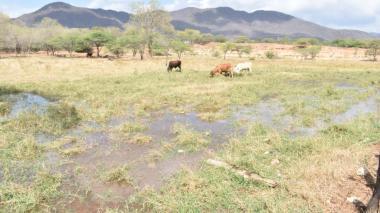 El agua del río Badillo, que es desviada por particulares, es usada para animales y regar cultivos.