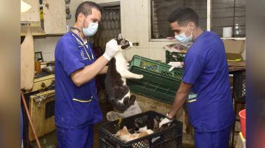 Miembros de la Fundación Cuidado Animal retiran a los gatos hallados en el interior de la vivienda.