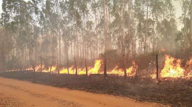 En video | Lanzan S.O.S. por incendio forestal  entre Santana y Pijiño, Magdalena