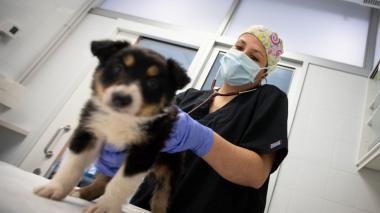 El detergente y el hidrogel no desinfecta a perros y gatos sino que los quema