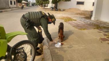 Policía Ambiental se encarga de alimentar perros y gatos en condición de calle.