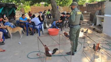 Casa por cárcel por apuestas de gallo durante cuarentena en Valledupar