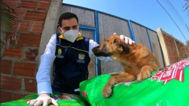 El gobernador Vicente Blel con uno de los caninos del centro de protección animal de Bolívar.