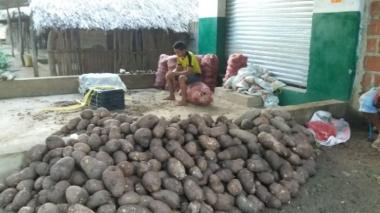 Parte de la yuca que donaron los campesinos de Bolivar.