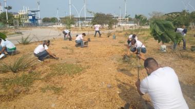 La siembra de este miércoles en los alrededores del antiguo polideportivo de Santa Marta.