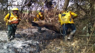 Bomberos siguen trabajando para apagar incendio en el parque Isla Salamanca