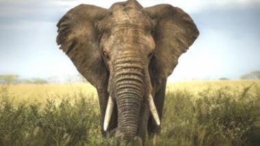 Flexibilizan fronteras para que una elefanta acceda a santuario en Brasil