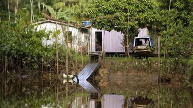Cae red empresarial acusada de talar 9.000 árboles centenarios en la Amazonía
