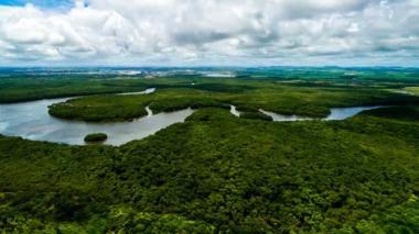 Reino Unido dona 280.000 millones de pesos para proteger Amazonia colombiana