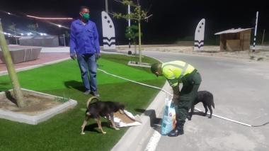 En video   Policía de Tránsito alimenta a perros callejeros de Rebolo