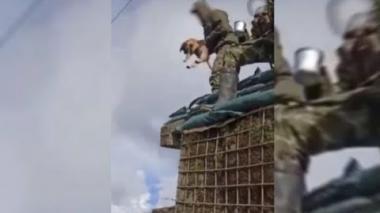 Retirados 4 militares que lanzaron a cachorro al vacío