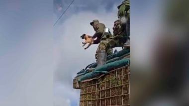 Indignación por soldado que lanzó a un perro al vacío en Nariño