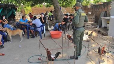 Dieciséis personas fueron sorprendidas en una gallera clandestina  en el barrio 1o. de Mayo de Valledupar.