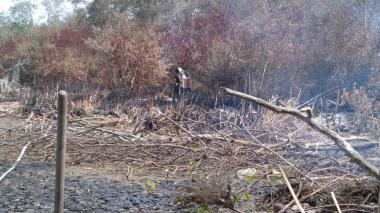 Caza de animales silvestres, la causa de los incendios en la Cienaga Grande