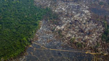 Colombia reduce deforestación anual en un 19.2%