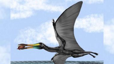 Descubren en Santander fósiles de pterosaurio