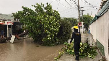 Alerta por inundaciones, árboles caídos y deslizamientos en Santa Marta