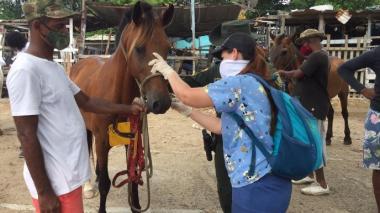 Distrito atiende a caballos cocheros en estado de desnutrición en Cartagena