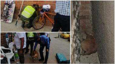 Imágenes del rescate de la canina hembra y sus cinco cachorros el jueves de esta semana en el centro comercial Portal del Prado.