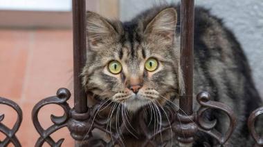 Hasta la fecha no existe evidencia que indique que las mascotas contagian a los humanos.
