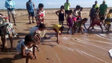 Liberan 211 tortugas marinas en la Alta Guajira